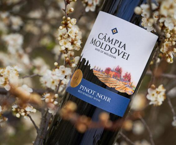 Moldovan Wine Label Design - Câmpia Moldovei